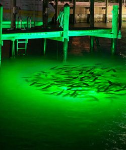 green-underwater-dock-light-snook